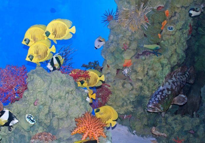 Al Museo Civico di Zoologia un settembre ancora pieno di eventi (Mycultureinblog)