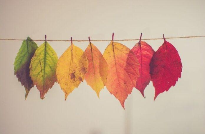 I colori dell'autunno per le tendenze fashion